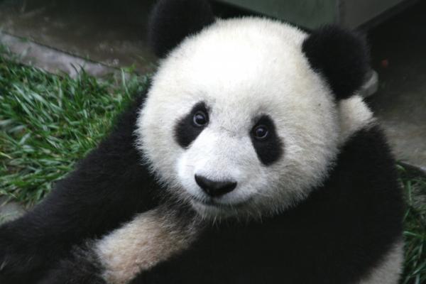 Google Panda, o que muda nas buscas?