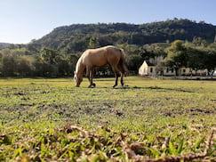 Foto câmera traseira, HDR trabalhou bem na iluminação do cavalo