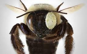 Câmera simula visão de inseto