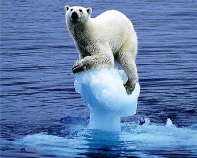 Banco Mundial quer governantes ativos contra o aquecimento global