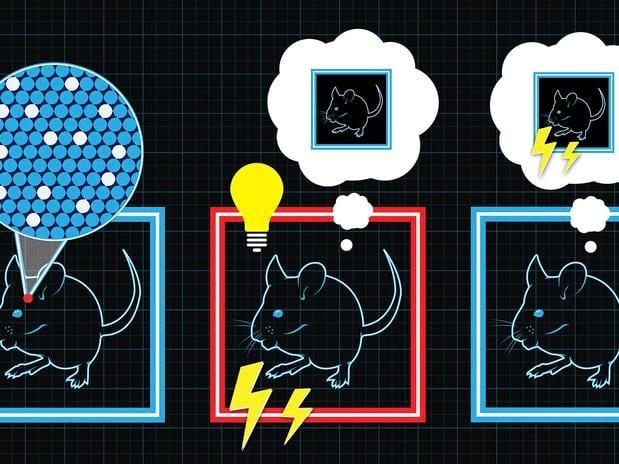 Lembranças de medo podem ser aplicadas artificialmente, afirmam cientistas