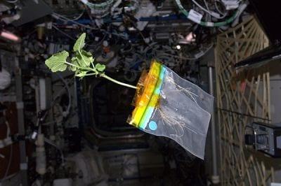 Pela primeira vez, NASA irá plantar vegetais no espaço