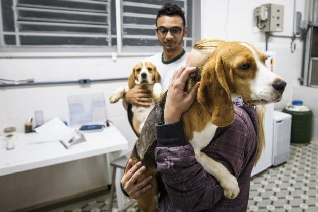 Beagles sendo retirados do Laboratório Royal.