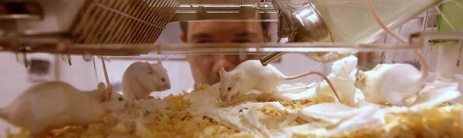 Pesquisas com uso de animais devem acabar em até cinco anos
