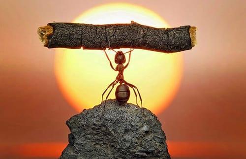 Por que as formigas conseguem carregar tanto peso?