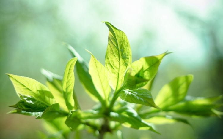 O que é fotossíntese?