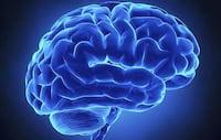 Cientista afirma ter desenvolvido cérebro humano em laboratório