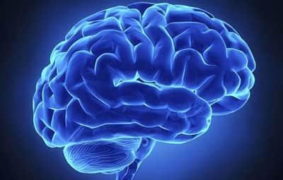 Cientista afirma ter desenvolvido c�rebro humano em laborat�rio