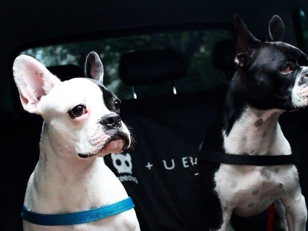 Uber fará transporte de animais em SP e RJ