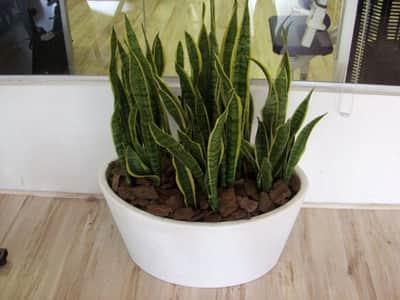 Conhe�a as cinco plantas recomendadas pela Nasa para purificar o ar da casa