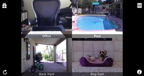 Filho de 4 patas: 7 Aplicativos para quem possui animais de estimação
