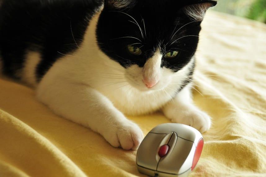 Para analisar mouses, nada melhor do que um especialista.