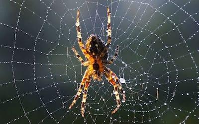 Cientistas consguem criar teia de aranha em laboratório