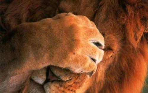 O leão está de olho com o que você posta no Facebook!