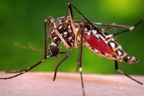 Bill Gates vai investir US$18 milhões para tornar mosquitos Aedes Aegypti estéreis