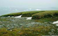 Aquecimento global deixa Antártida mais verde