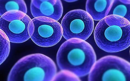 Células-tronco serão usadas para ressuscitar pessoas