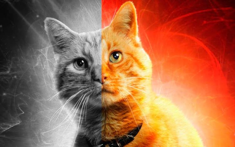 Entendendo o Gato de Schrödinger
