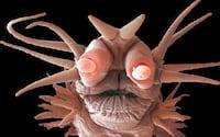 Monstros microscópicos