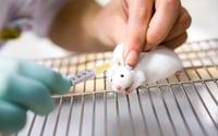 Cientistas conseguem diminuir tumor em ratos com auxílio de nanorrobôs