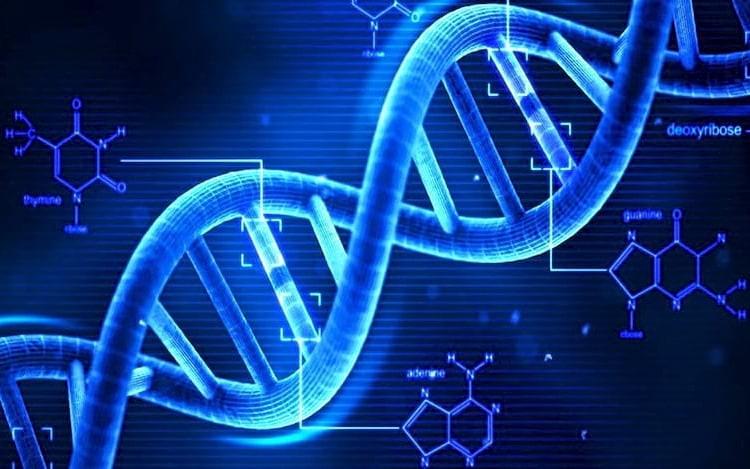 Estrutura do DNA já conhecido.