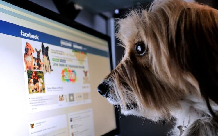 Facebook não permite mais a venda de animais vivos