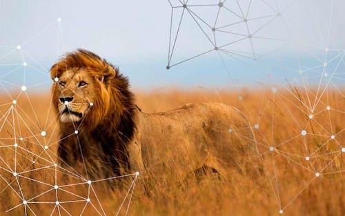 Como a internet das coisas está salvando animais ameaçados de extinção