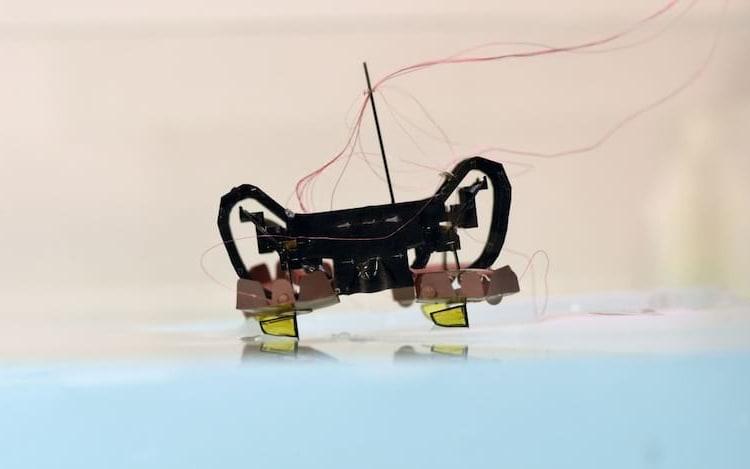 Robô da Harvard é capaz de nadar e andar sobre a água. O pequeno robô é do tamanho de uma moeda. No futuro, ele deve ser aprimorado.