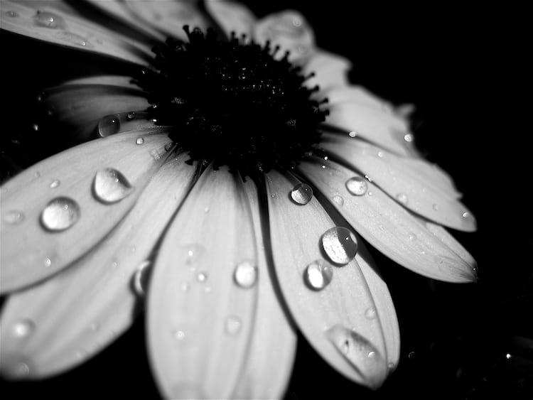 Textura em fotos preto e branco
