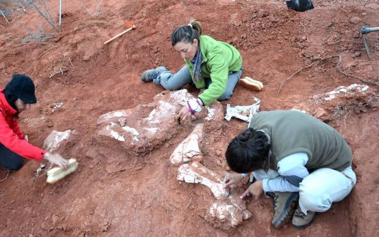Fósseis do dinossauro gigante
