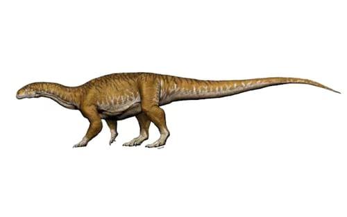 Fósseis de primeiro dinossauro gigante são descobertos na Argentina
