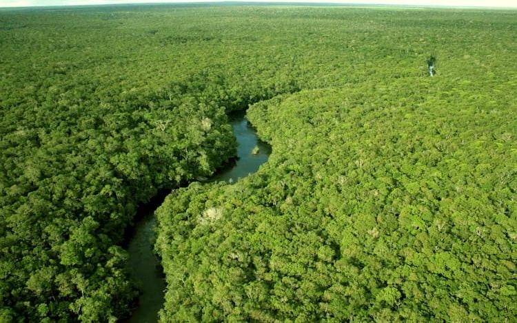 Drones colaboram na detecção e mapeamento da vida indígena na Amazônia.
