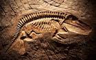 O que foram as extinções em massa?