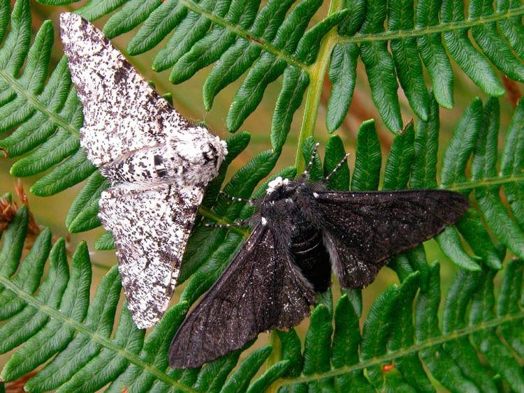 Mariposas são exemplo concreto da evolução