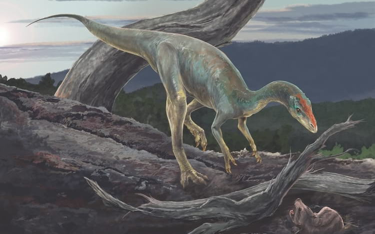 Estudo mostra que parente de tiranossauro viveu no Brasil há 233 milhões de anos.
