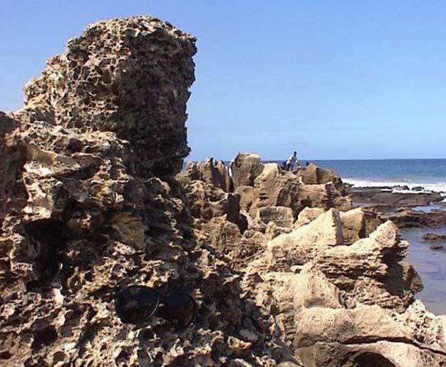 Ostras fósseis descansando vários metros acima da zona de arrebentação perto de Durban, África do Sul.