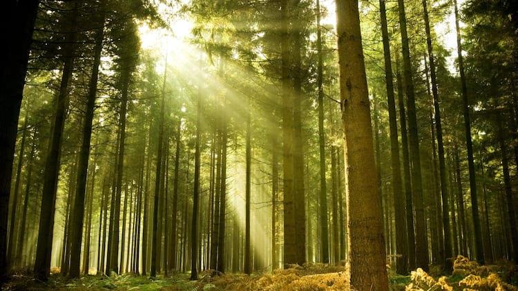 Placas de vídeo ajudam pesquisadores a obter imagens de florestas mais rapidamente