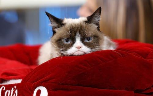 """Grumpy Cat morre aos sete anos: """"seu espírito continuará vivo por meio de seus fãs"""" dizem os donos"""