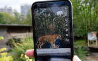 Snapchat e Zoológico alemão realizam projeto de conscientização em realidade aumentada