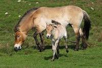 Ciência: Cavalos são domesticados a cerca de seis mil anos atrás