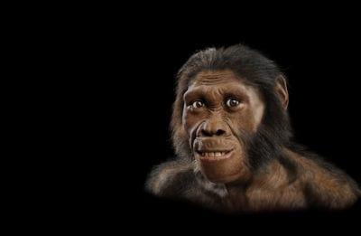 Ancestral do homem se alimentava de casca de árvores