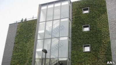 Trepadeiras nas fachadas ajudam combater a poluição