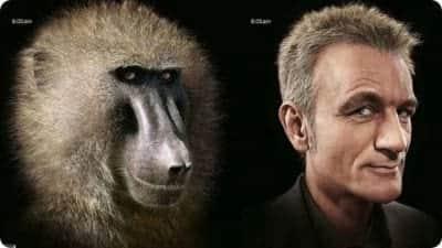 Estudiosos revelam que crise da meia-idade � heran�a dos primatas