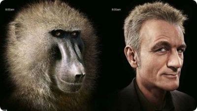 Estudiosos revelam que crise da meia-idade é herança dos primatas