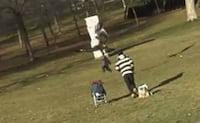 Vídeo de águia carregando bebê não é real