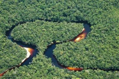 Florestas brasileiras vão ser mapeadas até 2016
