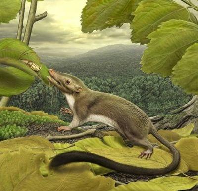Mamíferos com placenta surgiram apenas após era dos dinossauros